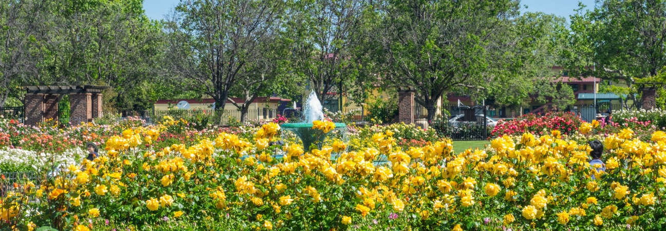 Roses In Garden: BlogsectionWhich Spring Activities To Choose In San Jose, CA